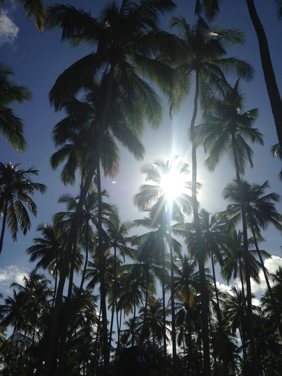 Day 45- 47: The Beach Coastal Lines of Brazil + Road Trip! (Gunga, Maragogi, Praia deCamerios)